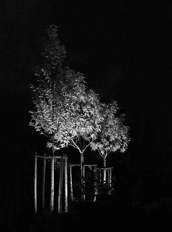 Lichtbaum